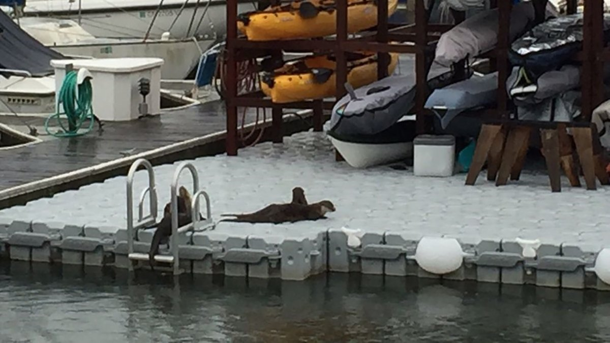 Seals-on-Dock-Blocks